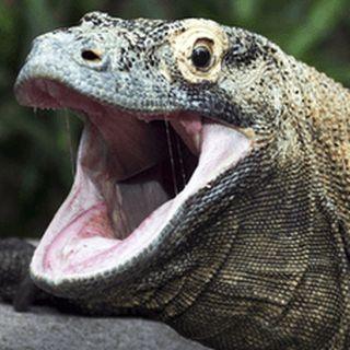 Lord Reptile
