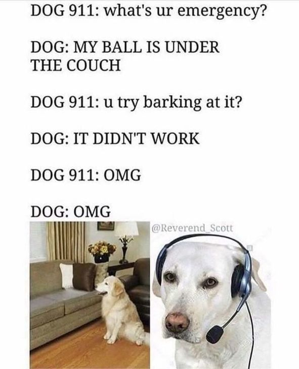 Insanity Wrap Presents Dog 911