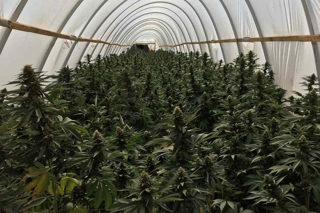 Border Insecurity: Huge Cartel Marijuana Farm Bulldozed 300 Miles Inside California
